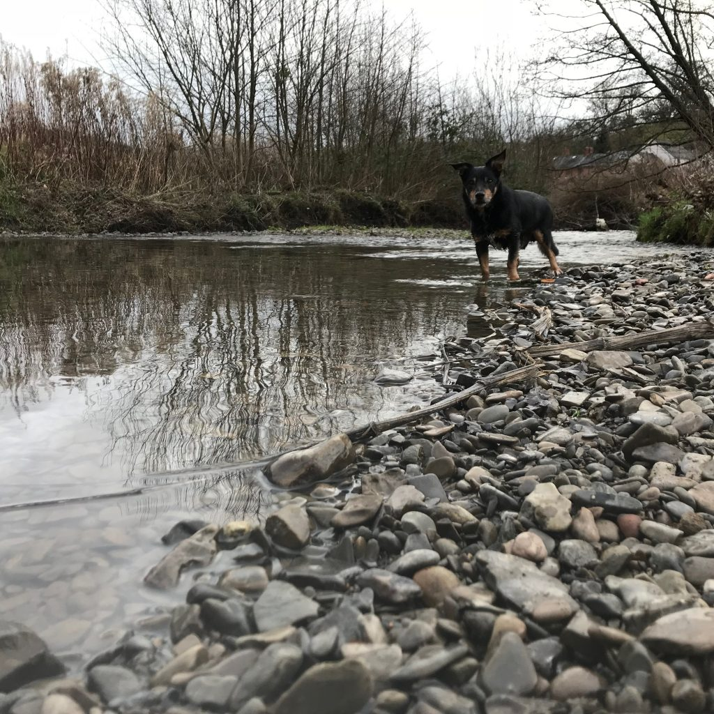 Gravel shores provide safe access for people and animals Shallow waters are great for play and the gradual deepening Perfect for young fry