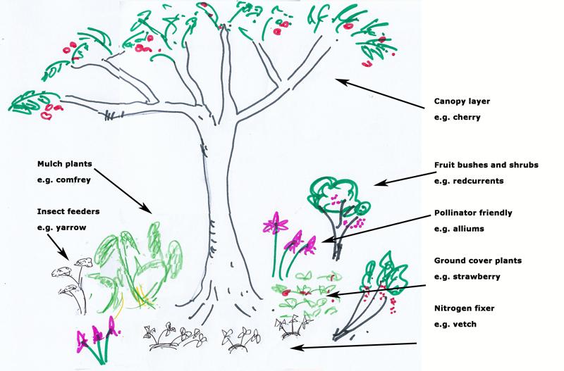 simple plant guild #permaculture